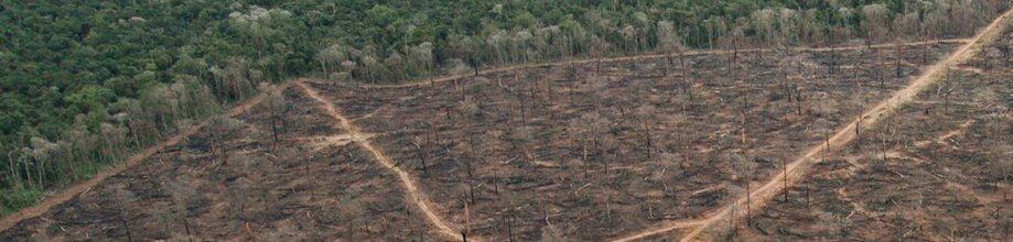Deforestation and REDD Measures in the Amazon | REBRAF, Brazil
